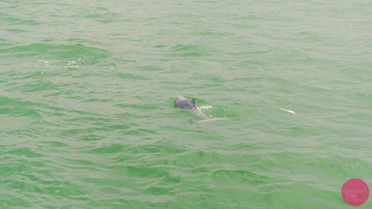endangered pink dolphin hong kong
