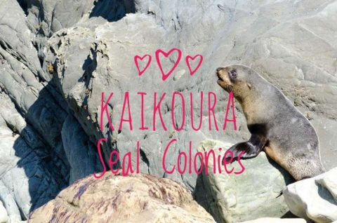 Seal Colonies, Kaikoura Blog