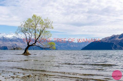 Wanaka Tree Blog