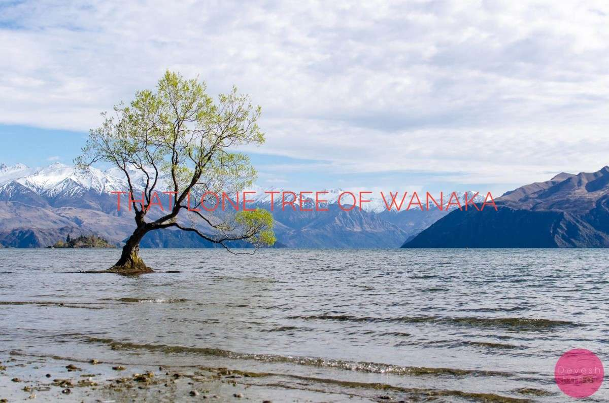 Photos Of That Lone Tree In Lake Wanaka