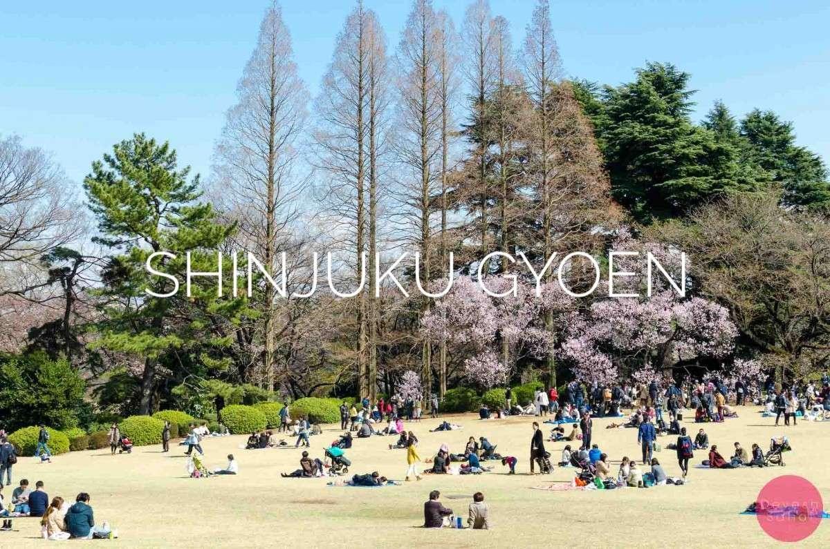 Shinjuku Gyoen Tokyo Blog