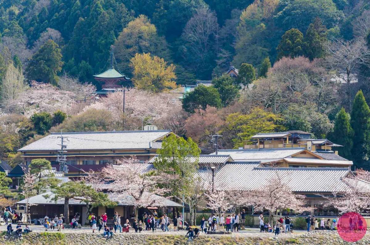 The Exquisite Beauty Of Arashiyama