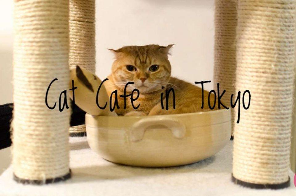 Cat Cafe Helsinki