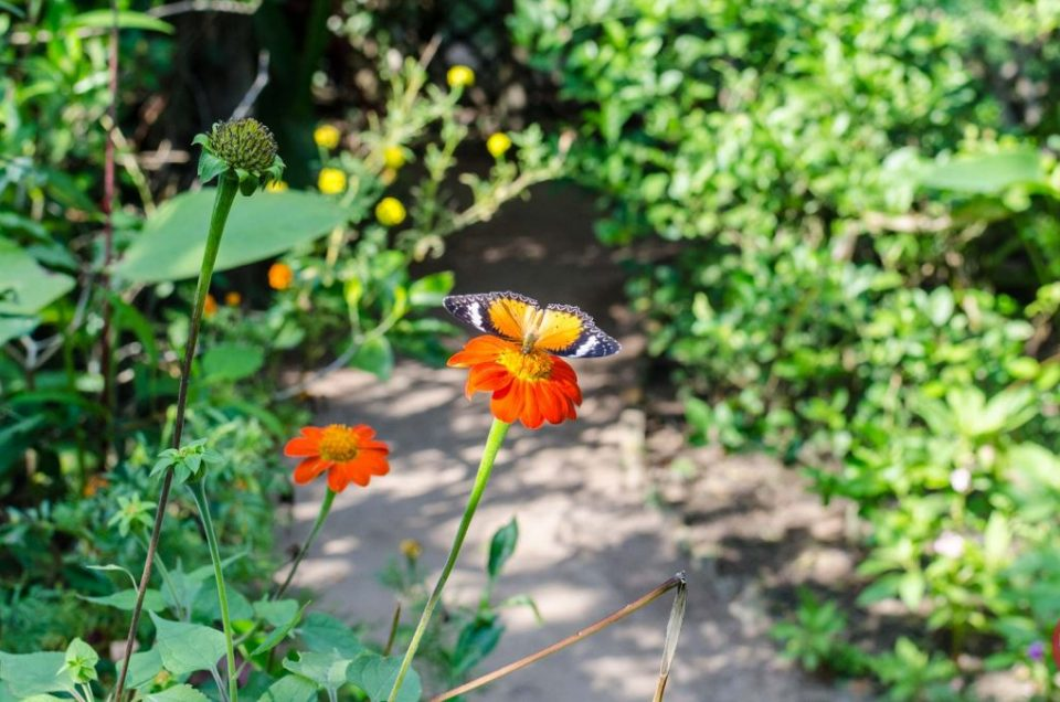 Banteay Srey Butterfly Centre – A Short & Sweet Visit