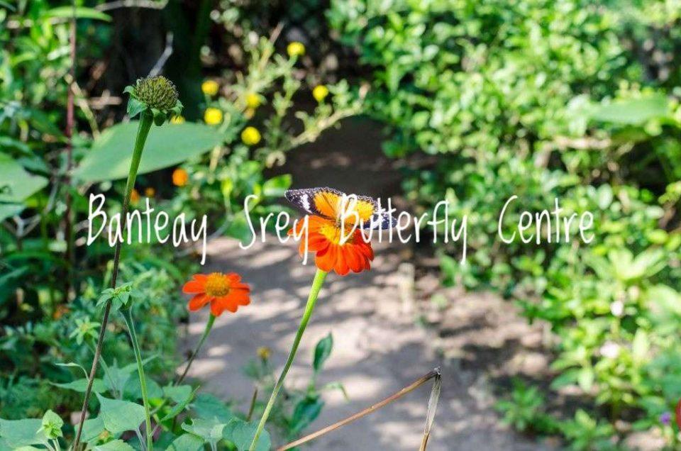Banteay Srey Butterfly Centre - A Short & Sweet Visit