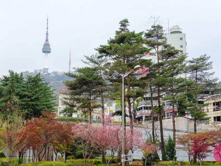 spring season n seoul tower