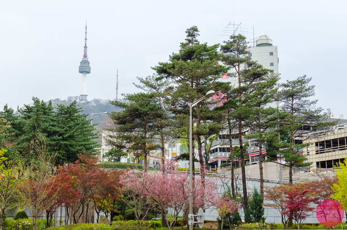 spring season n seoul tower