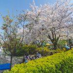 picnic cherry blossom yeouido park seoul