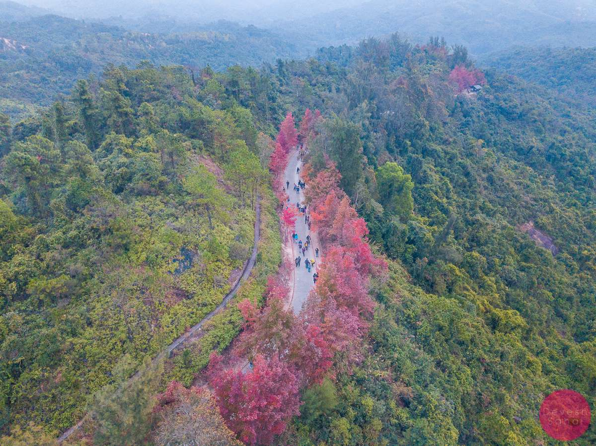 how to get to tai lam country park