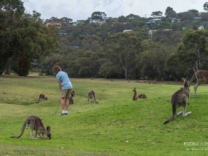 Anglesea Golf Course, Australia