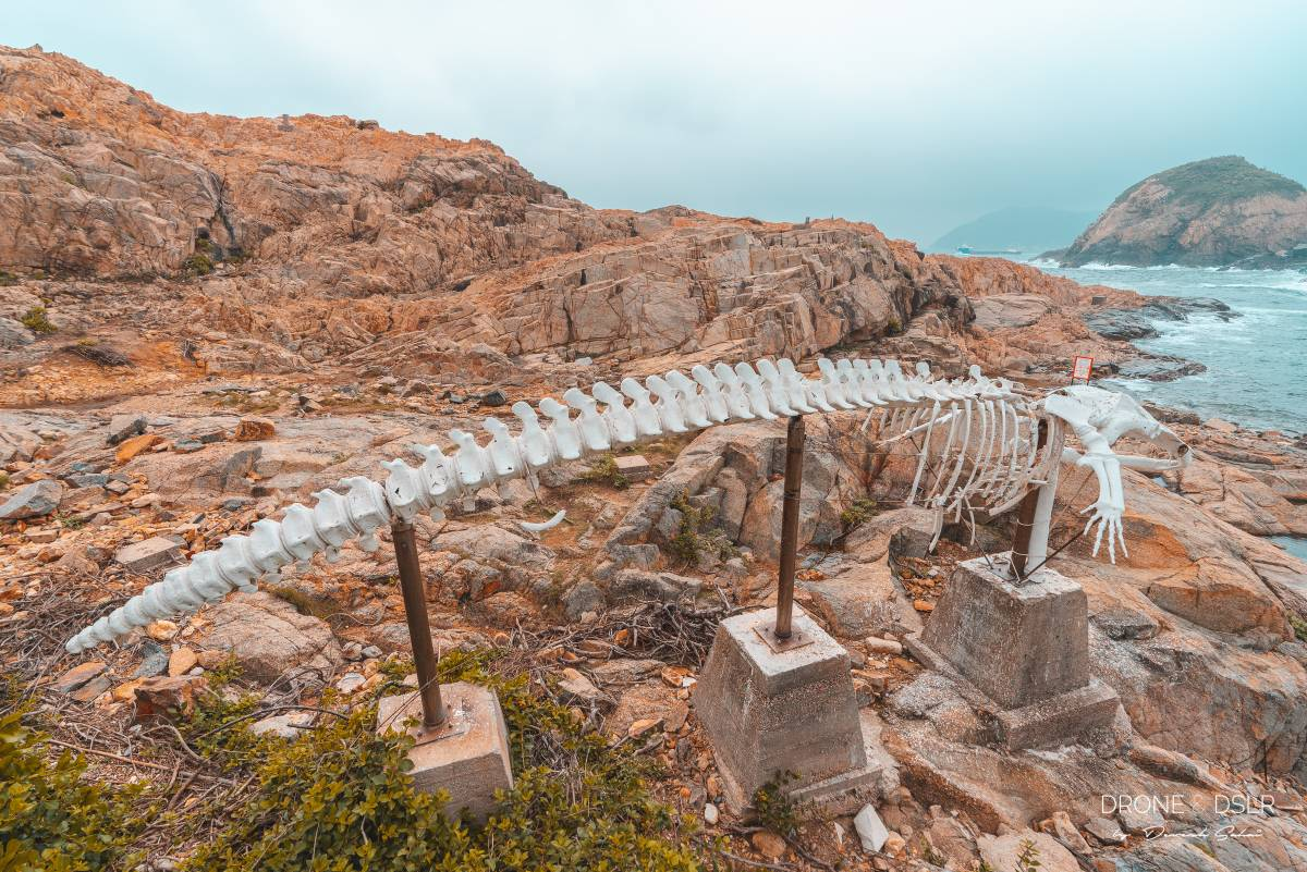 whale bones at Cape D'Aguilar Hong Kong